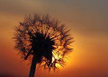 Pusteblume im Sonnenuntergang von Gabi Siebenhühner