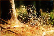 Grasses Autumn Herbst  by Sandra  Vollmann
