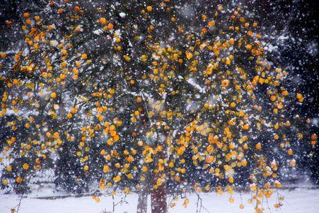 Schnee2-148
