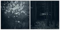 finsterwald by Dorit Fuhg