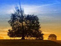 Autumn mood 971916 von Mario Fichtner