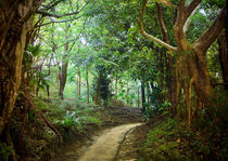 Forest path at Naha, Okinawa von Erik Mugira