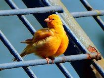"""Goldvogel"" von Zarahzeta ®"