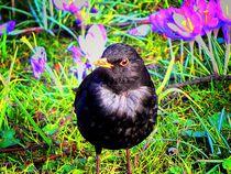 psychedelic black bird by Zarahzeta ®