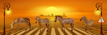 Use the zebra crossing von Monika Juengling