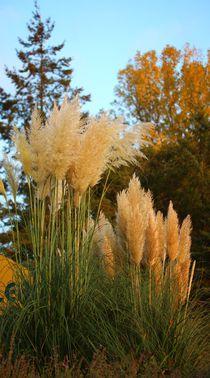 Ein sanfter Gruß vom Herbst von Simone Marsig