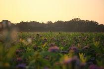Verschlafenes Feld in abendlicher Herbstsonne von Simone Marsig