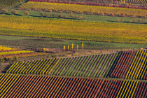Weinberge im Herbst by la-mola-lighthouse