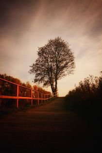 Herbstbaum  von Susanne  Mauz