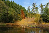Herbst von Gabi Siebenhühner