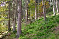 Märchenwald von Gabi Siebenhühner