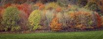 Autumn trees by Leighton Collins