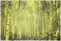 birkenwald von micha gruenberg