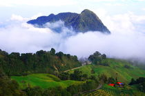 Farms in the mountains of Colombia by Daniel Steeves