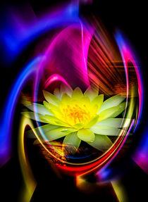 Blütenträume - Seerose von Walter Zettl