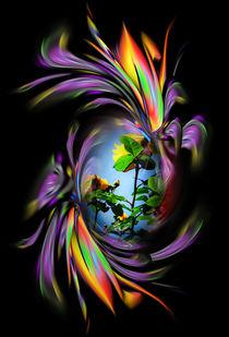 Blütenträume - Rose 2 von Walter Zettl