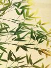 Bamboo-lightning
