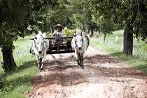 Farmer in Old Bagan by Manuel Bruque