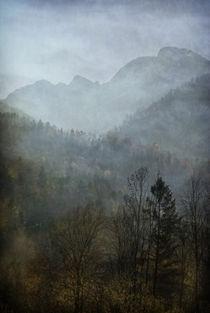 nebelschönheit  -  beautiful mist von augenwerk