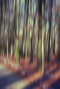 light between the seasons by augenwerk