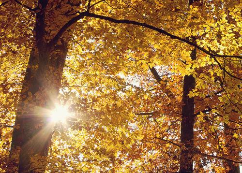 Herbstsonne-im-laub
