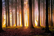 Goldener Wald by Nicc Koch