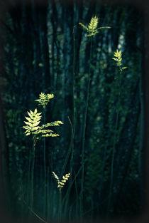sunlit leaves von augenwerk