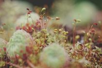 Tiny mossy world by augenwerk