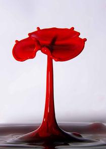 water poppy von Doug McRae