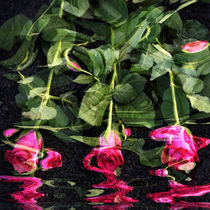 Rosen im Wasser - Roses in the Water by Chris Berger