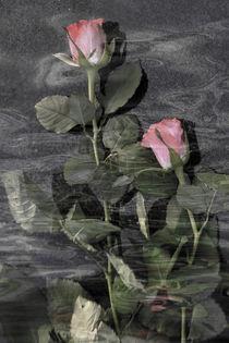 Rosenwasser - rose water von Chris Berger