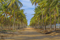 Topical Landscape Scene at Porto Galinhas Brazil by Daniel Ferreira Leites Ciccarino