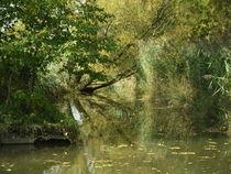 Flussabwärts von Andrea Meister