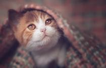 süßes Katzenbaby unter der Decke von Janina Bürger