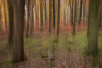 Herbst Wald by dag