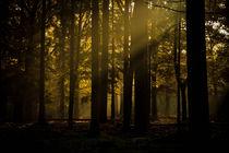 'Mystic Forest' by Jolanda van der Meer