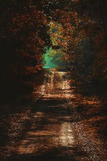 'Enchanted Forest' by Jolanda van der Meer