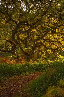 Der Elfenbaum von lilithdavinci