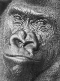 Black Gorilla Portrait by Radu Bercan