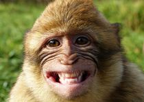Bitte lächeln von Gabi Siebenhühner