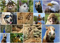 Tierische Collage von Gabi Siebenhühner