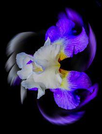 Blütenträume - Lilie 2 von Walter Zettl