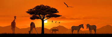 Afrika-tiere-pano