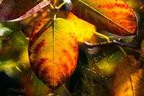 'Bunte Herbstblätter' by Nicc Koch