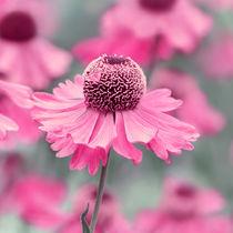 Pink by Violetta Honkisz