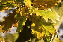 Autumnal Shades  von Rob Hawkins