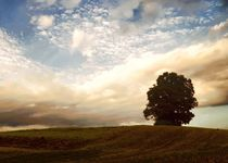 lonely tree by Photo-Art Gabi Lahl
