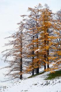 'Kontrast im Schnee' von Thomas Matzl