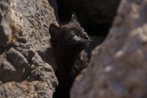 Kitten looking up from between the rocks by Jessy Libik