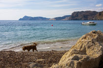 Dog wandering along a rocky beach by Jessy Libik